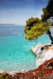 Seashore Azure Sea Vacation Skopelos Greece. Pine forest tree by the sea - Skopelos Island, Greece stock photo