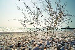 Seashore. Beautiful  Seashore in late August Stock Image