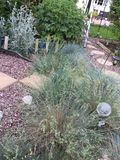 The seashore bed in a Gloucester garden. Landscaped garden  in Gloucestershire Stock Image