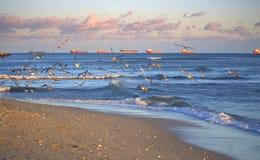Seashore birds and ships raid Stock Photo