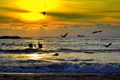 Seashore birds and sunrise. Sunrise  and  flying birds silhouettes on the seashore Varna,Bulgaria,Black sea coast Stock Photography