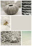 Seashore collage Stock Images