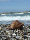 Seashore Royalty Free Stock Image