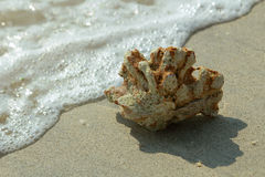 Seashore and coral Royalty Free Stock Photos
