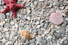 Seashore covered by colorful pebbles, seashells and starfishes Royalty Free Stock Image
