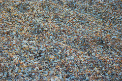 Seashore covered with seashells chips Stock Images