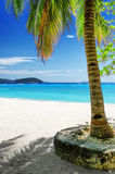 Green tree on  white sand beach. Malcapuya island, Royalty Free Stock Photo