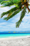 Green tree on  white sand beach. Stock Image