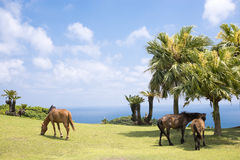 Seashore of horses Royalty Free Stock Photos