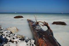 Seashore at Jasmund National Park Stock Images
