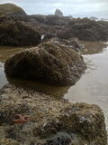 Seashore at low tide. Seashore tide pools with starfish Stock Image