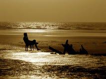 Seashore nostálgico imagem de stock royalty free