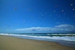 Seashore Oxnard Калифорнии Стоковое Изображение RF