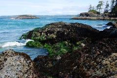 Seashore in pacific rim stock photography