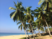 The seashore with palm trees. India. Kerala Stock Photo