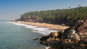 The seashore with palm trees. India. Kerala stock video