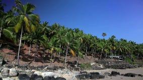 The seashore with palm trees. India. Kerala stock footage
