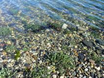 Seashore plants and stones under waves Royalty Free Stock Photo