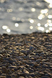 Seashore with rabble Royalty Free Stock Images