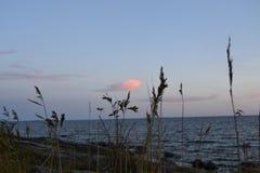Seashore, Reposaari стоковая фотография rf