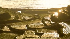 Seashore rice terraces stock video