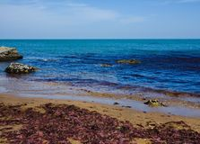 Wrack. Seashore, rocks, blue water, seaweeds Stock Photography