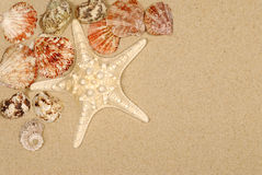 Beach sand background starfish seashells copy space Royalty Free Stock Images