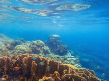 Seashore scenery with coral reef and tropical fishes. Blue sea view with marine fauna. Oceanic ecosystem. Beautiful undersea photo for banner template or Royalty Free Stock Photo