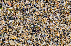 Seashore With Sea Shells royalty free stock images