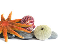Seashore Still Life royalty free stock image