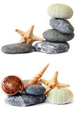 Seashore Still Life Stock Images