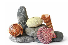 Seashore Still Life royalty free stock photos