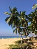 Seashore with stones and palm trees. India. Kerala. Stock Photo