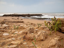Seashore with stones and plant Royalty Free Stock Photos