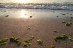 Seashore at sunrise Stock Photos