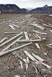 seashore svalbard планок вверх помыл деревянное Стоковые Фотографии RF
