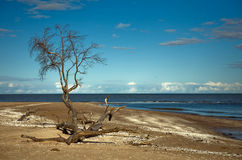 Seashore with tree Stock Photos