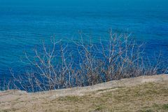 Seashore, tree, blue water, Caspian sea Stock Photo