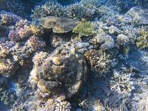 Seashore w świetle słonecznym Egzotyczna wyspa brzeg płytka woda Tropikalnego seashore krajobrazu podwodna fotografia Fotografia Royalty Free