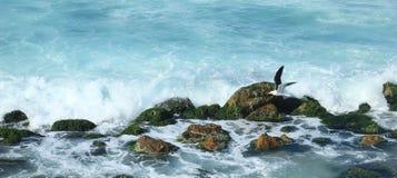 Seashore w Aleksandria Zdjęcia Stock