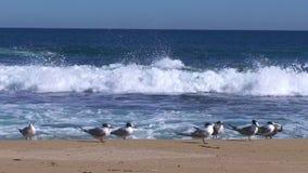 Seashore z fala z frajerami i zbiory