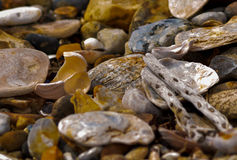 seaside Imagens de Stock Royalty Free