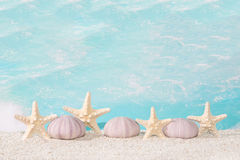 Seaside beach shells Stock Images