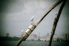 Seaside birds stock photography