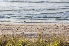 Seaside Stock Photography