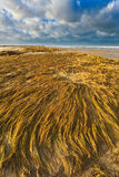 Seaside with dune grass at sunset Stock Photos