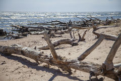 Seaside with fallen trees Stock Photos