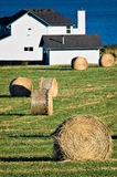 Seaside Farm. Hayrolls in the field of a seaside farm on Whidbey Island, Washington royalty free stock photos