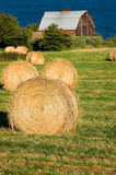 Seaside Farm. Hayrolls in the field of a seaside farm on Whidbey Island, Washington royalty free stock image