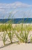 Seaside grass Stock Photography